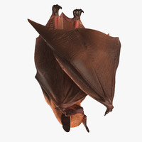 hanging bat 3ds