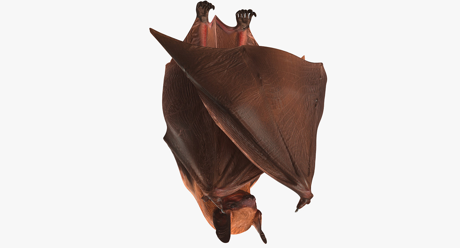 hanging bat 3ds