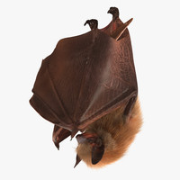 Hanging Bat with Fur 3D Model