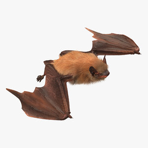 flying bat 2 fur 3d model