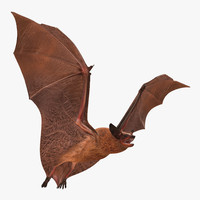 flying bat 3d model