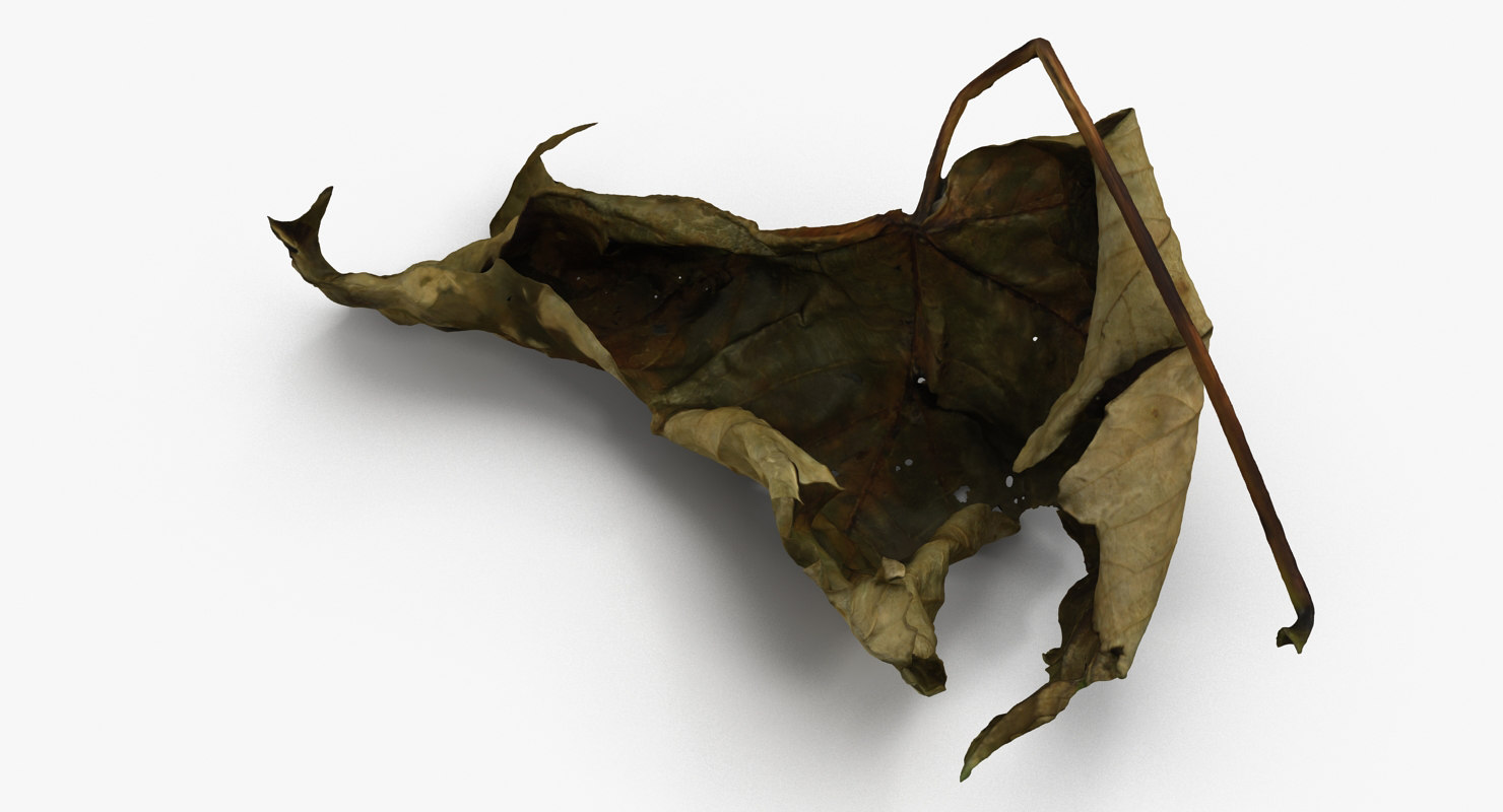dead leaf 3d model