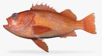 sunset rockfish fbx