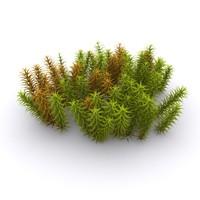 Arctic moss