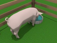 3ds domestic pig engraving