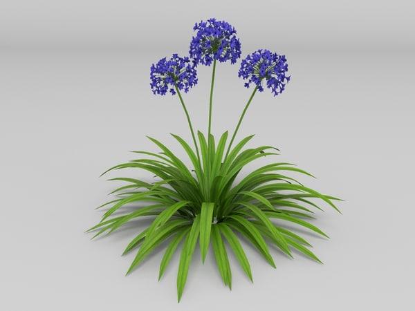 plant agapanthus africanus 3d model