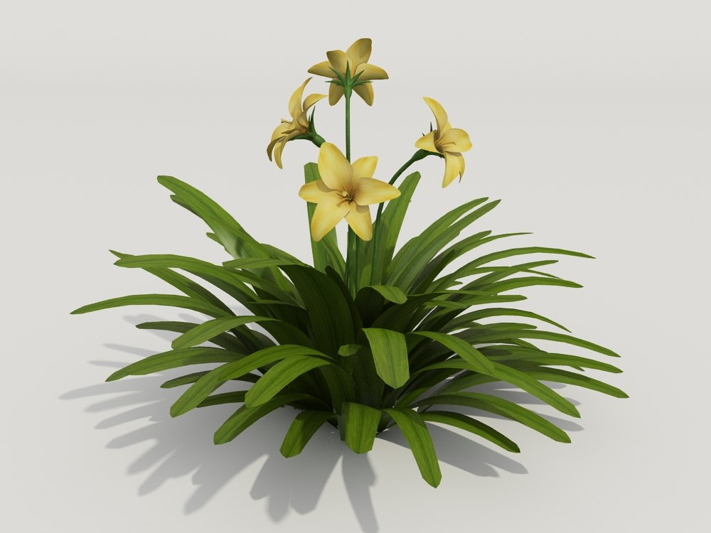 3d model plant hemerocallis fulva