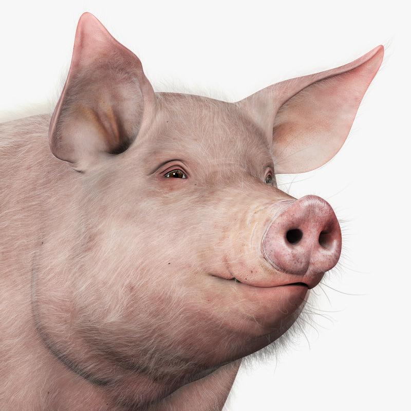 4 pigs adult index