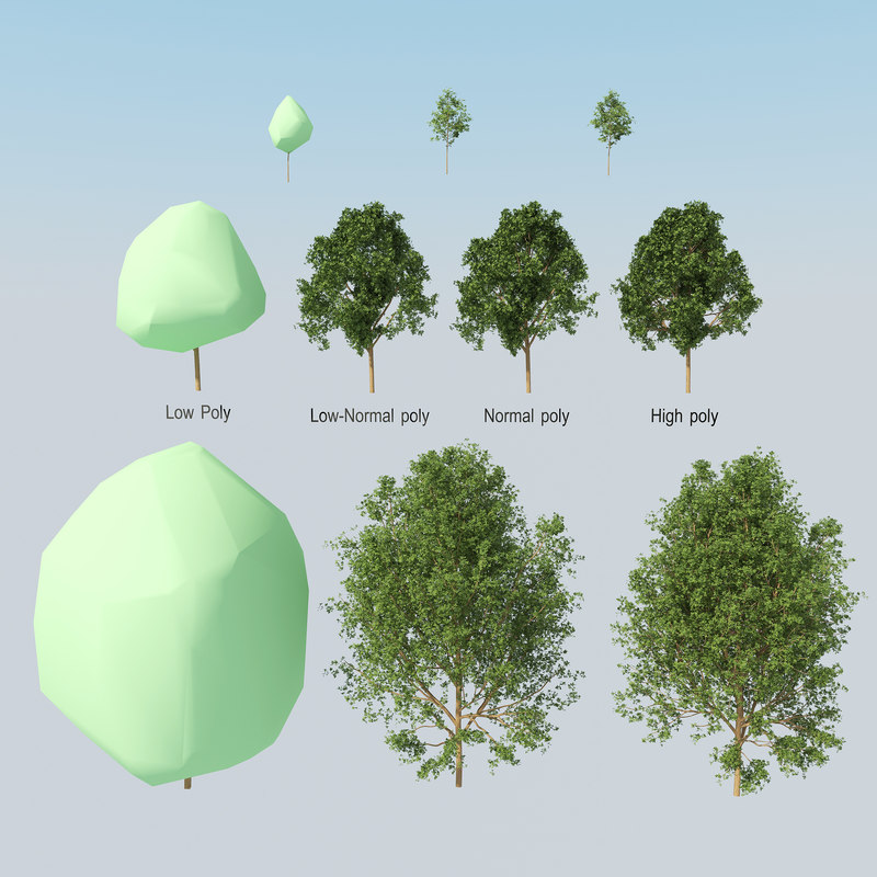 3d model summer tree collections