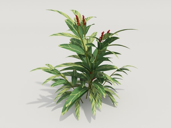 3d model plant alpinia zerumbet