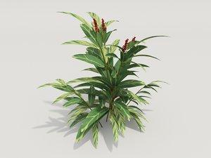 3d model plant alpinia zerumbet
