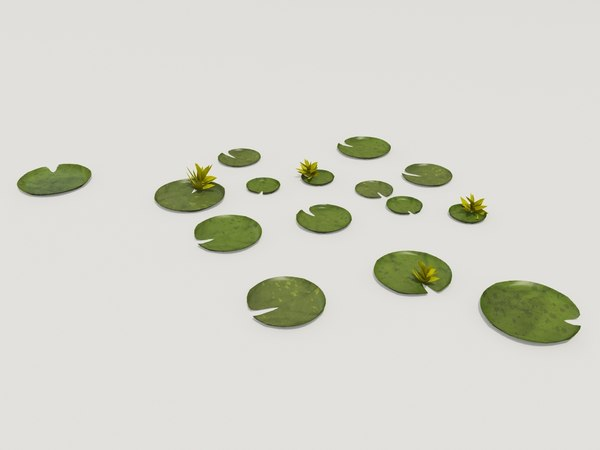 plant victoria amazonica 3d model