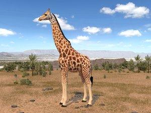 rigged animal 3d model