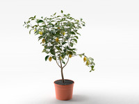 3d model lemon tree pot 02