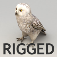 Snow Owl Rigged