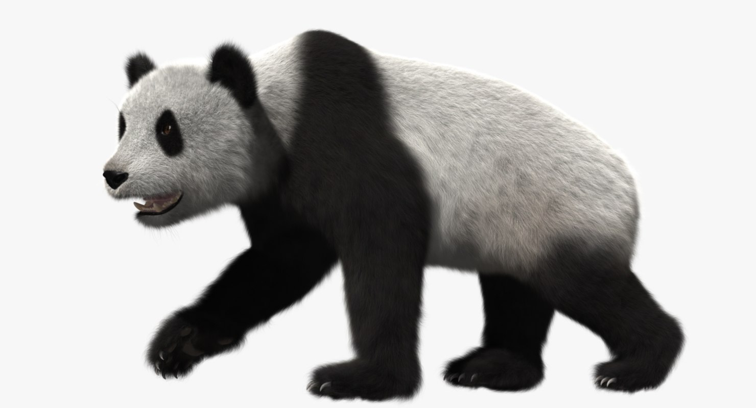 giant panda animation 3d model