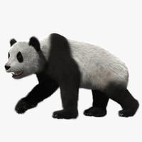 giant panda 3d obj