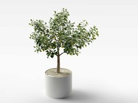 3d model lemon tree pot