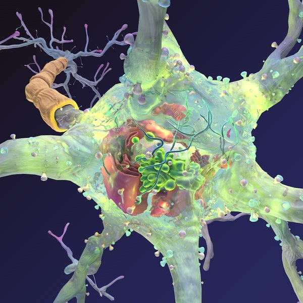 neuron synapses myelin 3d model