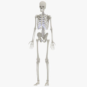 anatomically accurate human 3d model