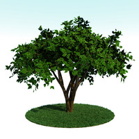 3d tree summer
