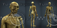 hd human body anatomy 3d model