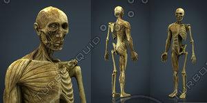 hd human body anatomy 3d model