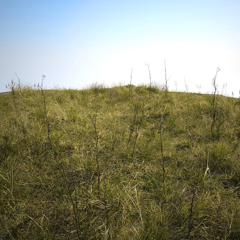 grass plants agricultural 3d model