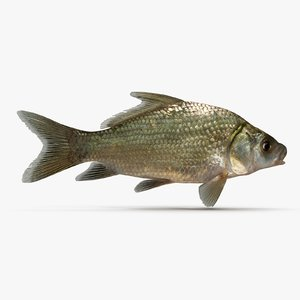 smallmouth buffalo fish 3d 3ds