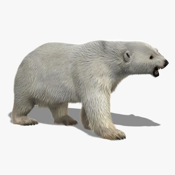 3d polar bear 2 fur model