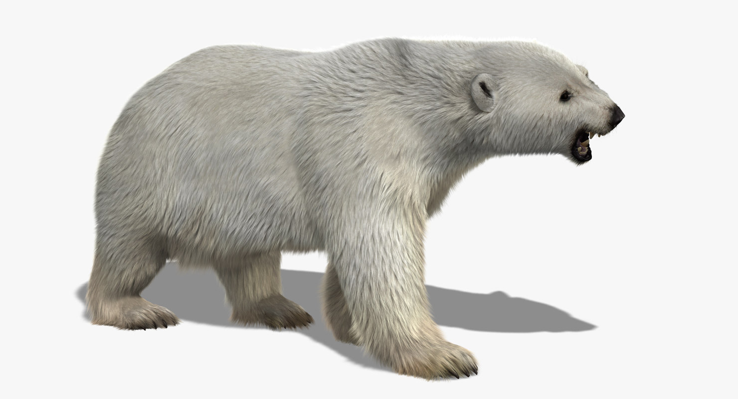 3d polar bear 2 fur model