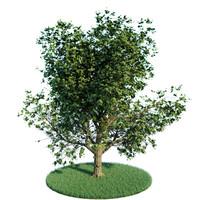 tree summer 3d model
