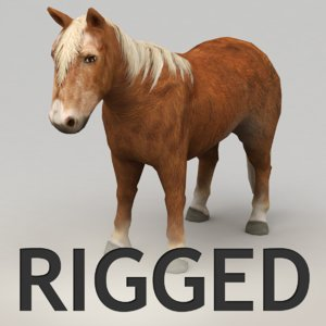 3d rigged pony model