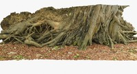 3d tropical tree roots