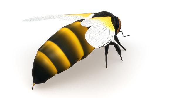 obj honey bee