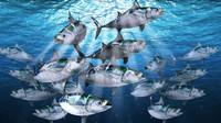 3d bonito fish