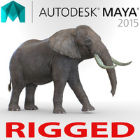 Elephant Rigged for Maya 3D Model