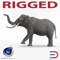 Elephant Rigged for Cinema 4D