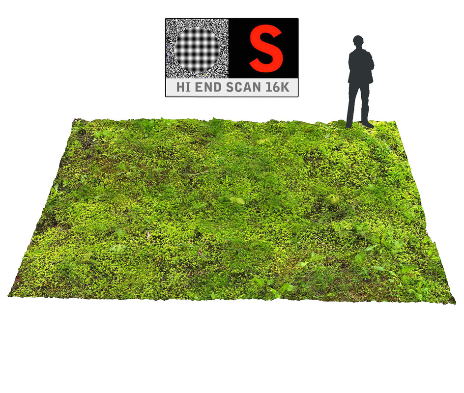3d model forest ground 16k hd