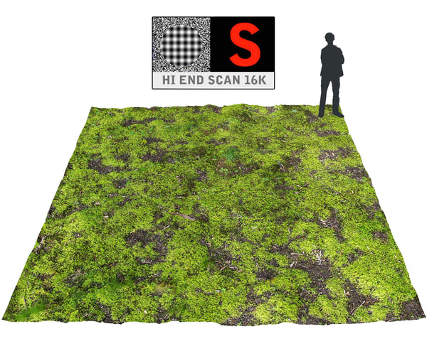 forest ground 16k hd 3d model