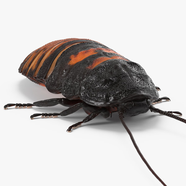 madagascar cockroach 3d 3ds
