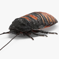 3d model madagascar giant hissing cockroach
