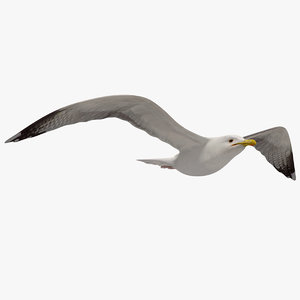 3d seagull flying animation model