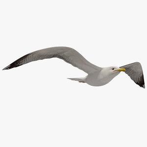 3d seagull flying animation model