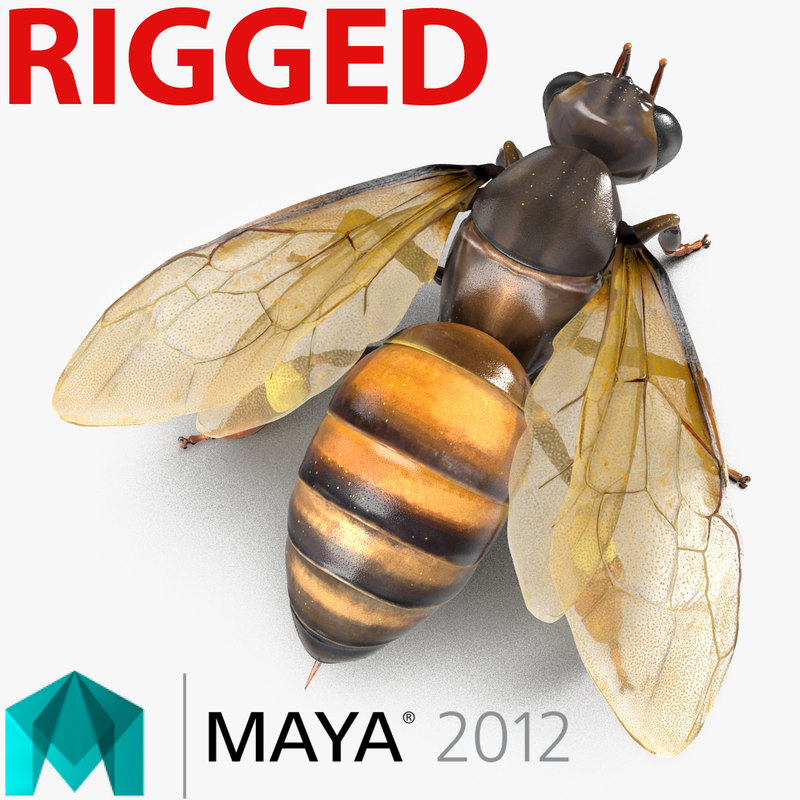 honey bee rigged 3d model
