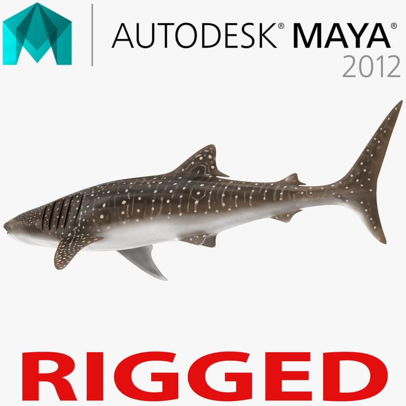 whale shark rigged 3d ma