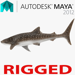 whale shark rigged 3d ma