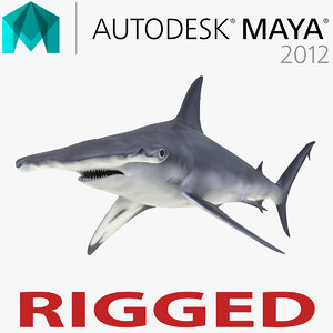 great hammerhead shark rigged 3d model