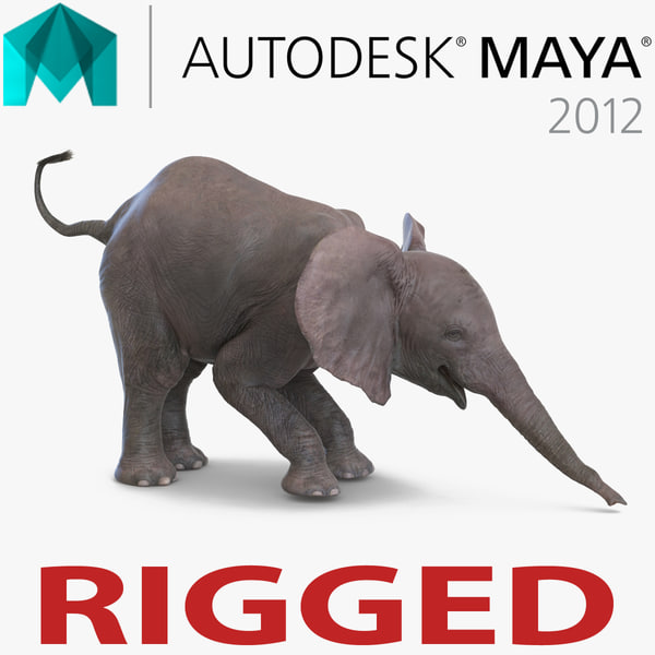 baby elephant rigged 3d model