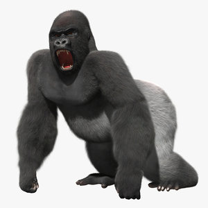 3d model gorilla shave haircut